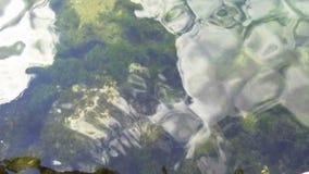 Le fond de la mer par l'eau clair comme de l'eau de roche Pierres dans les algues banque de vidéos