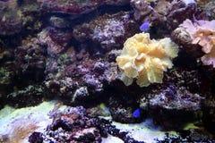 Le fond de la mer sur les éponges et les algues de récif près du bain de poissons comme fond photographie stock