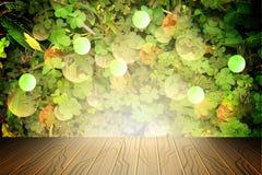 Le fond de la trinité pousse des feuilles pour le jour du ` s de StPatrick, Photo stock