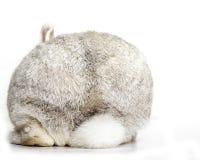 Le fond de lapin photographie stock libre de droits