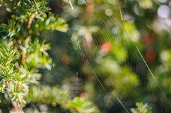 Le fond de plan rapproché de toile d'araignée (toile d'araignée). Photographie stock libre de droits