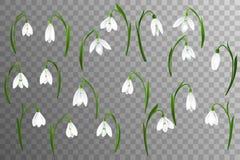 Le fond de ressort avec le perce-neige fleurit, herbe verte, hirondelles et ciel bleu illustration stock