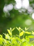 Le fond de tache floue de la variété de plante verte part de la profondeur du champ Photographie stock
