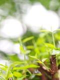 Le fond de tache floue de la variété de plante verte part de la profondeur du champ Photos stock