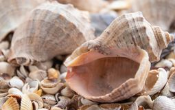 Le fond de thème de mer avec des coquilles a dispersé en gros plan Mer Shell Collection image stock