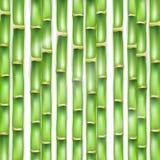 Le fond de vert de vecteur fait d'un bambou Photos libres de droits