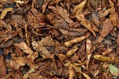 Le fond des feuilles d'automne tombées photos stock