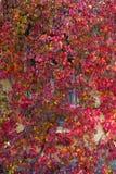 Le fond des feuilles et de la fenêtre Images libres de droits