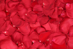Le fond des pétales des roses rouges aiment le sujet sur Valentine Photos stock