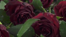Le fond des roses rouges avec de l'eau laisse tomber la vidéo de longueur d'actions de mouvement lent banque de vidéos