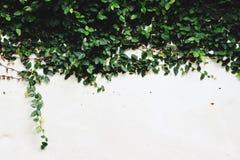 Le fond du plâtre blanc est en baisse photographie stock