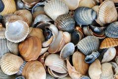 Le fond du Seashell Photos libres de droits