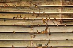 Le fond en bois avec les feuilles jaunes images libres de droits