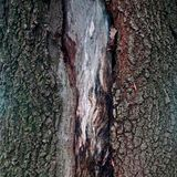 Le fond en bois de modèle de texture photos libres de droits