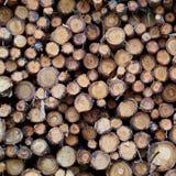 Le fond en bois de modèle de texture images libres de droits