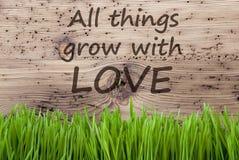 Le fond en bois lumineux, Gras, citent toutes les choses se développent avec amour Images stock