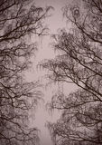 Le fond est une allée des branches d'hiver Photographie stock libre de droits