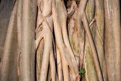 Le fond et la texture d'art de l'arbre photo libre de droits