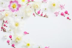 le fond fleurit le blanc de vecteur de source d'illustration Photos stock