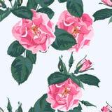 Le fond floral à la mode avec la roseraie rose sauvage de chien de canina de rosa fleurit Illustration botanique de vintage illustration de vecteur