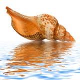le fond a isolé le blanc de seashell image libre de droits