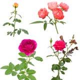 le fond a isolé le blanc rose photos stock