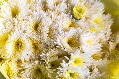 Le fond jaune de fleur de chrysanthème photographie stock libre de droits