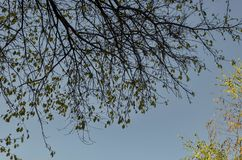 Le fond naturel d'automnal beaucoup s'est embranché arbre avec quelques feuilles jaunes sur le ciel bleu, parc du sud photographie stock