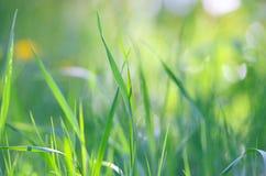 Le fond naturel des lames d'herbe verte se ferment  Photos libres de droits