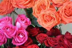 Le fond s'est composé de différentes roses colorées Photos stock