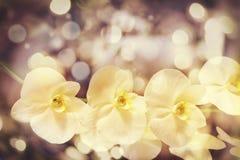 Le fond trouble de bokeh jaune avec l'orchidée blanche gentille fleurit Photos stock