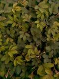 Le fond vert de feuille images stock