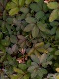 Le fond vert et la fleur pourpre qui beaux photographie stock