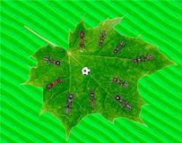 Le football de jeu de fourmis sur la feuille verte Image stock