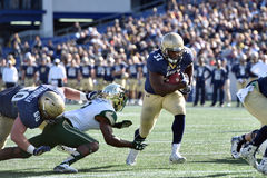 2015 le football de NCAA - la Floride du sud à la marine Photographie stock