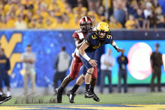 2014 le football de NCAA - le WVU-Oklahoma Photographie stock libre de droits