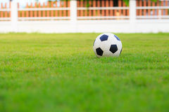 Le football sur le champ de l'herbe verte Photos stock
