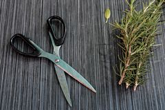 Le forbici e la disposizione piana con le erbe e la pianta fresche per l'essiccamento e produrre delle spezie hanno messo sul fon Fotografia Stock