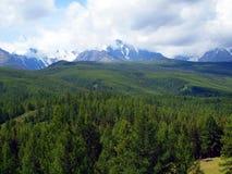 Le foreste dell'Altay, montagna Altai Immagine Stock