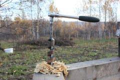 Le foret dans l'arbre colle  photo libre de droits