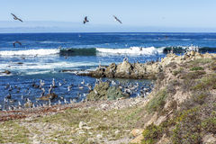 Le formazioni geologiche & gli uccelli di mare che volano & si sono appollaiati sulle rocce, Fotografie Stock