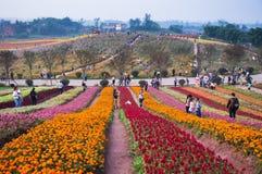 Le forme del fiore in parco Fotografia Stock