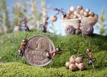Le formiche commercializzano, acquistano, racconti della formica Fotografie Stock Libere da Diritti