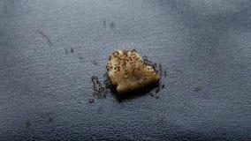 Le formiche mangiano i vari alimenti video d archivio