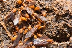 Le formiche sotteranee immagine stock