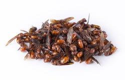 Le formiche sotteranee maschii su fondo bianco fotografia stock libera da diritti