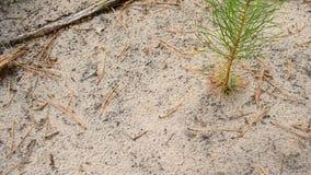 Le formiche strisciano su un percorso su terra sabbiosa video d archivio