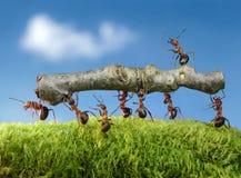 Le formiche trasportano il libro macchina immagine stock
