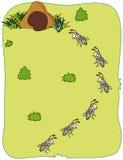 Le formiche trasportano l'alimento Fotografie Stock