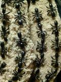 Le formiche vanno marciare uno per uno Immagine Stock